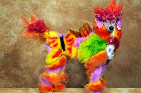 bright poodle