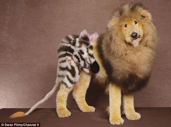 Lion doggo