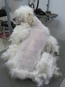 matted dog