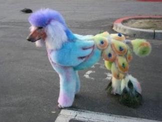 peacock doggo