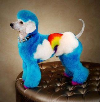 rainbow doggo