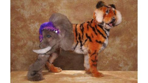 tiger doggo